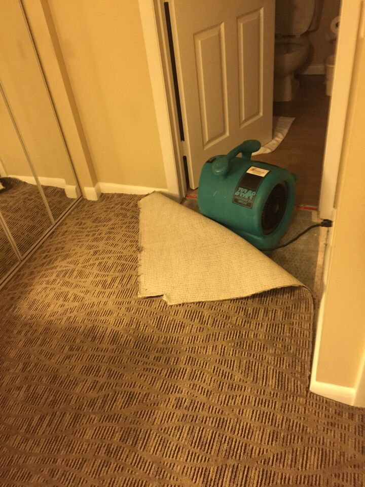 How To Dry Carpets Best Home Design Interior